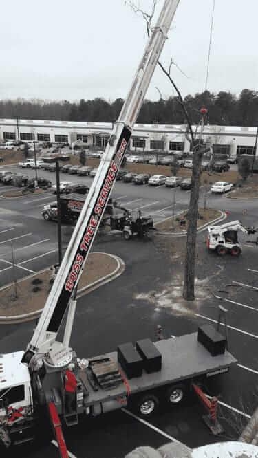 Boss Tree Service crane in parking lot