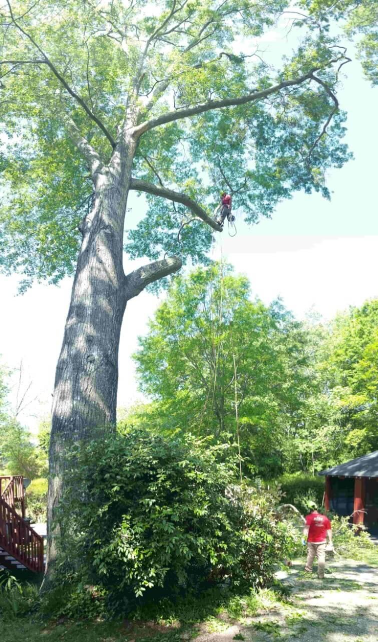 Man walking on tree with tree brush below