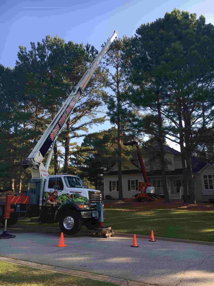 Boss Tree service crane working on tree