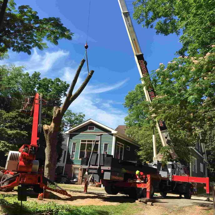 Crane attached to tree branches